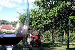 rajacke-pivnice-milenovic-vino-2
